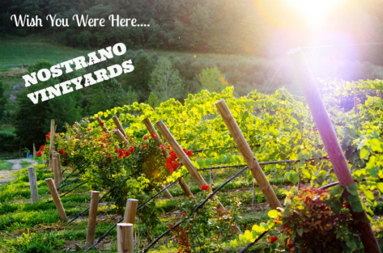 Get Out of Town - Nostrano Vineyards